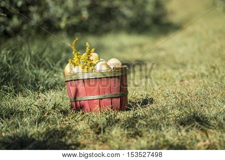 Basket of fresh apples in orchard