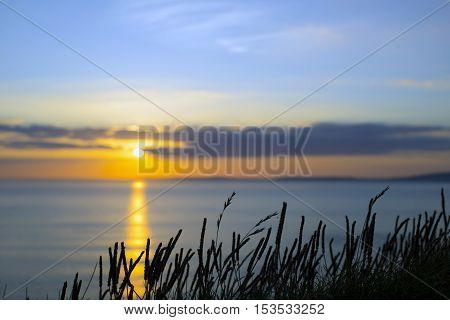 beautiful yellow sunset over loop head with the wild tall grass on the wild atlantic way in ireland