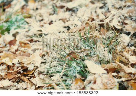 First Snow After Snowfall On Autumn Falling Leaves