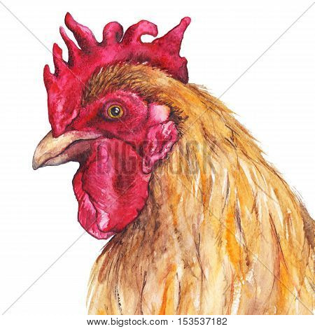 Watercolor bird rooster chinese horoscope 2017 new year isolated