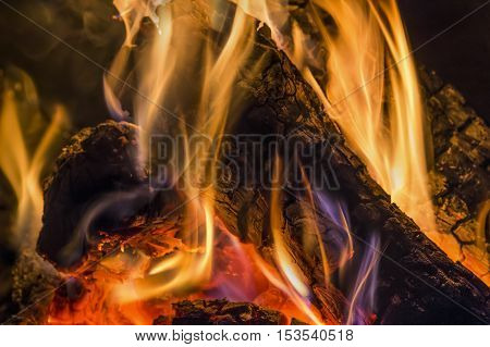 Flames dance on charred logs in a fire pit.
