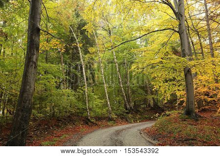 Path through the autumnal forest. Poland .