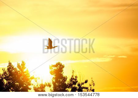 Silhouette of Cormorant Flying in the Dusky Sunset Sky