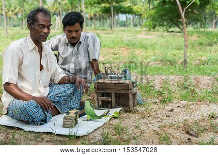 Dindigul India - October 23 2013: Two ambulant future telling merchants use a green parrot to flip cards supposedly giving clues about the future of the client. Rural setting with green foliage.