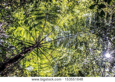 Bali Indonesia green palm tree in the Jungle lake Tamblingan