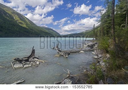 Snags near the shore. Kucherla lake. Altai Mountains Russia. Sunny summer day.