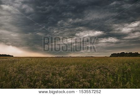Dark storm clouds in the sky above a wild field.