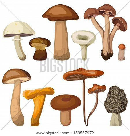 Mushrooms forest edible chanterelle percini cap boletus greasers honey agaric aspen russule. Vector square closeup beautiful clip art side view color illustration sign set collection white background