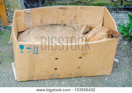 Homeless sad dog sleeping in box on street