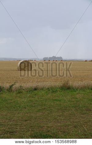 A round straw bale on a field a rainy autumn day in Sweden. With ample space for text.