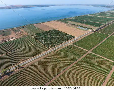 Grape Orchards Bird's-eye View. Vine Rows. Top View On The Garden On A Background Of The Estuary, Vi