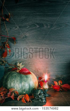 Halloween background - green pumpkin with red leaves of wild grapes skull and red burning candle on a dark wooden background. Space for copy. Toned selective focus.