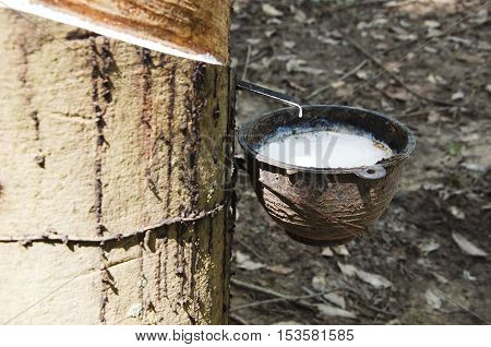 Rubber cups to accommodate a water timber.