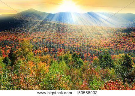 White mountain national forest in autumn time