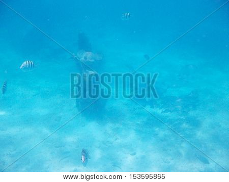 Statue In Bahamas Sea