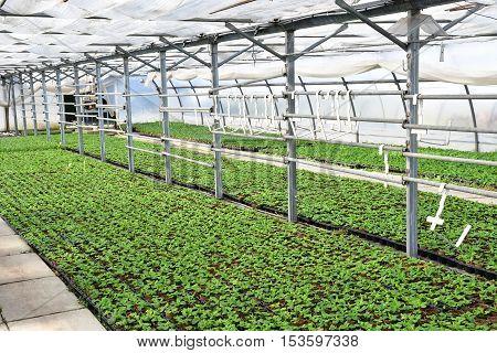 Les Mureaux France -   the greenhouse