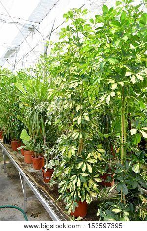 Les Mureaux France -  : the greenhouse