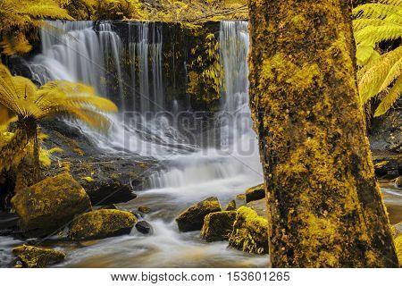 Horseshoe Falls In Mount Field National Park