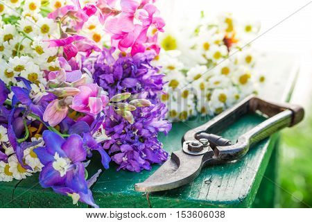 Closeup of beautiful flowers on wooden table in garden