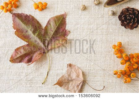 Autumn Falll Leaves Copy Space Toning Thanksgiving Background