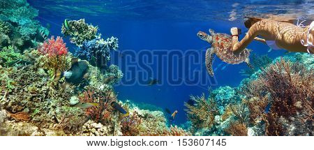 Underwater panorama in a coral reef with colorful sealife.
