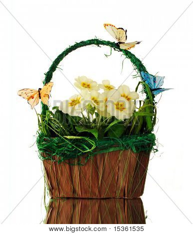 Spring basket with primroses