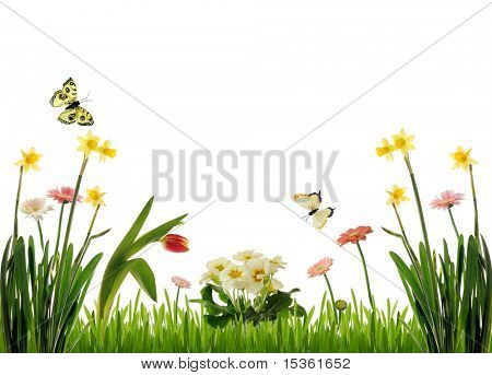 Spring flowers scenery, isolated
