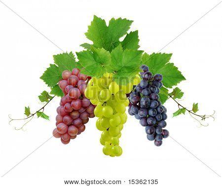 Three various grapes as decorative motif
