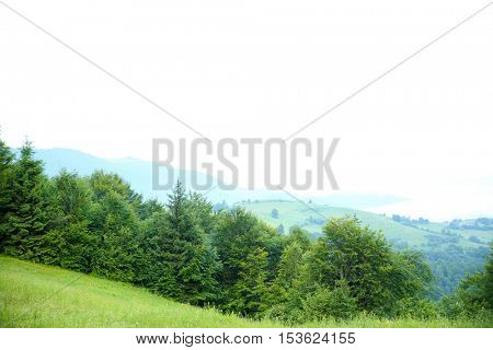 Mountain forest in summer