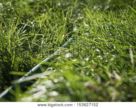 Close up of fresh thick grass. Green grass macro photographed in bright, contrasting light