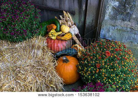 An arrangement of pumpkins gourds and mums arranged in an autumn decoration.