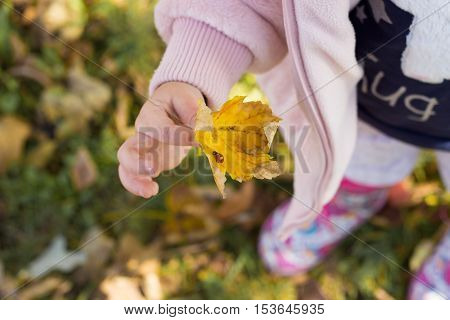 Toddler girl holding yellow leaf with lady bug on it