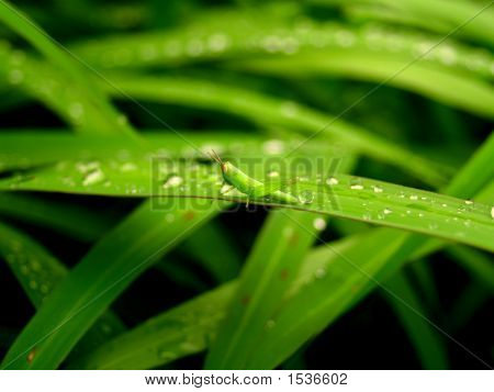 Abstraction Of A  Plant  Leaves