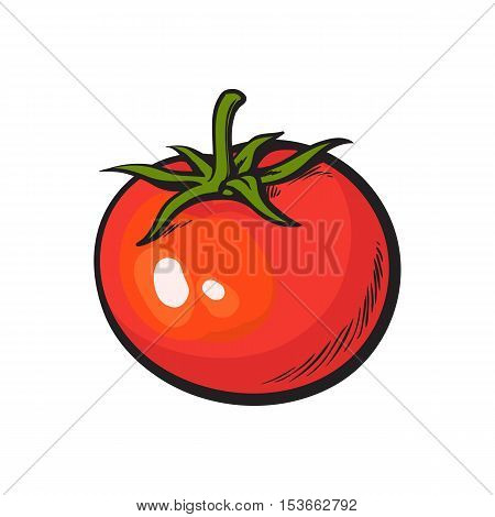 Sketch style drawing of shiny ripe red tomato, vector illustration isolated on white background. Appetizing bright red tomato, side view, hand drawn illustration