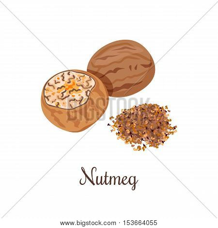 Nutmeg whole and crushed powder. Spices isolated on white background. Vector illustration. Can be used for package, prints, wrapping, menu, price tag, label, healthy brochure, organic. As logo, symbol