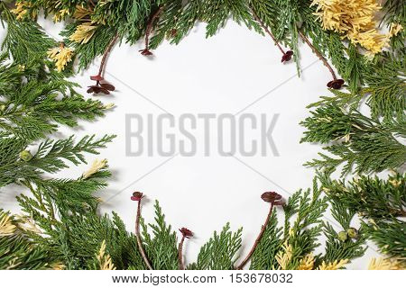 Christmas background border with evergreen fir tree and purple succulents isolated on white.