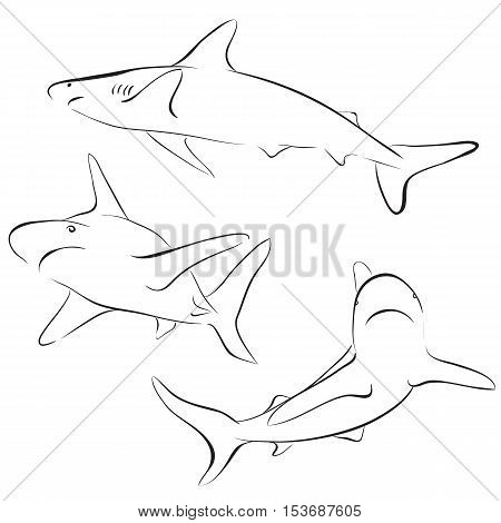 Graphic collection of vector sharks drawn in line art style. Sea and ocean predator. Coloring book