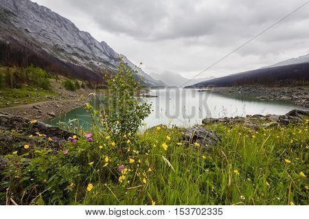 Wildflowers On The Shore Of A Mountain Lake - Canada