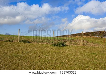 Wire Fence And Hedgerow
