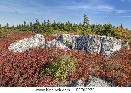 Autumn colors decorate the Bear Rocks area of West Virginia's Dolly Sods Wilderness.