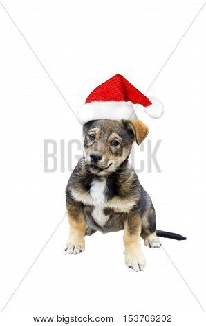 funny cute puppy in Christmas cap on a white isolated background