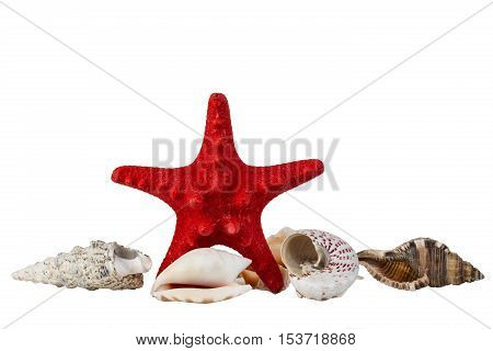 Red starfish and some sea shells isolated on white background.