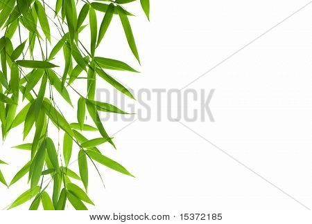 bamboo leaves High resolution image of border with wet bamboo-leaves isolated on a white background. Please take a look at my similar bamboo-images