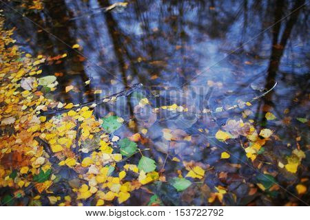 Fallen autumn leaves floating on a dark pond