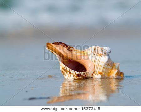 The mussel on the ocean beach