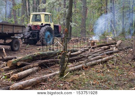 Pine stump, result of tree felling. Total deforestation, cut forest. Tractor