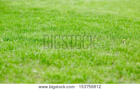 nature, summer and background concept - close up of lawn or meadow with mown grass