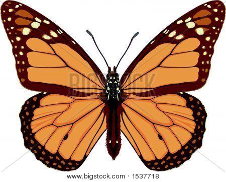 Monarch Butterfly.Eps