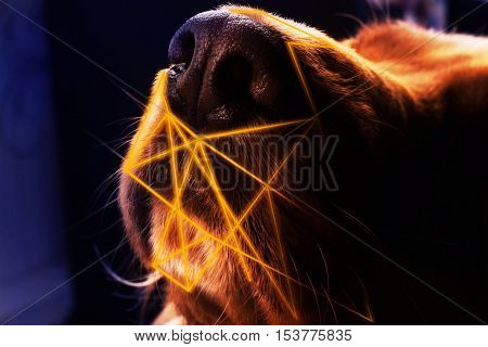Closeup photo of texture on a dog's nose with light lines abstraction