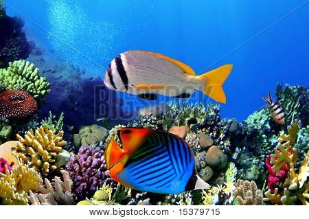Doublebar Bream And Threadfin Butterflyfish